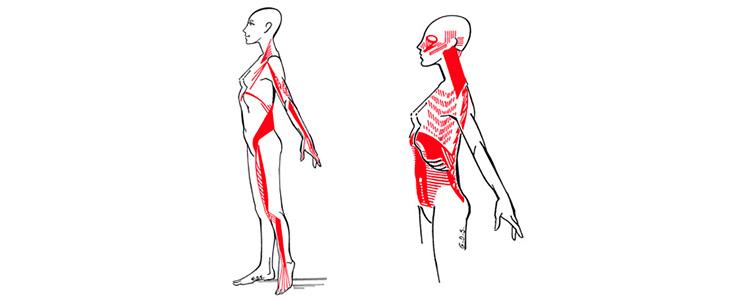 cadenas-posturales